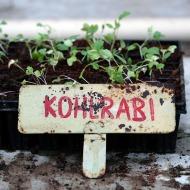Jungpflanzen im Kulturgarten