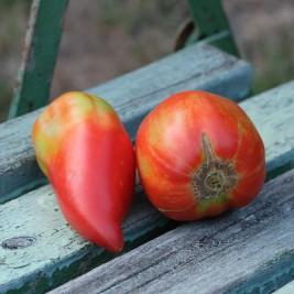 Tomate Andenhorn